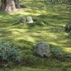 大原三千院から寂光院へ、京都洛北エリアで静寂に癒される日帰り旅