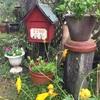 しっとり朝のお庭