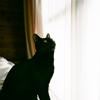 """はじめまして、黒猫の""""こんぶ""""です"""