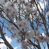 【昔語り】花見