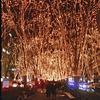 冬の風物詩「SENDAI光のページェント」(宮城県仙台市)