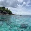 【リぺ島③】飲み干したくなるほど綺麗な海と数百万匹の光る魚の群れ【他は全てクソ】