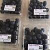 ふるさと納税 急げば間に合う大粒のブルーベリーがおすすめ
