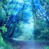 絶望の林を抜け、恐怖の森に踏み込んでやる!