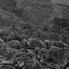 野焼き後 別世界の平尾台 福岡県北九州市小倉南区平尾台