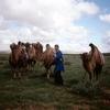 内蒙古からチベット7000キロの旅➉ ラクダに乗って
