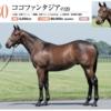 【キャロットクラブ2021募集馬】尺・歩様・動きを評価!(17)▶︎(30)【第二のステファノスに出資したい…】