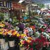 ブラジル・フェイラ(青空市)で新鮮野菜やお土産を買う週末