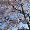 桜が…🌸❤️