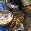 大豆収穫スタート@阿蘇