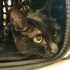 今日の黒猫モモ&白黒猫ナナの動画ー802