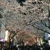 東京八重洲口にある桜を楽しんできた。その後のオールが・・・。