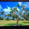 55インチ4K液晶テレビ LUCA LT-55B620購入