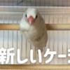 鳥かご(ケージ)を買い増しました「イージーホームクリアーバード35-WH」