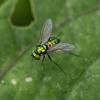 小さな小さな昆虫たち