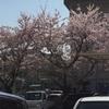 春を感じるこの頃…