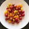 トマト焼きそばとプッタネスカ