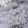 冬至の剣山遊山 山小屋