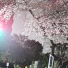 桜と夜の間に