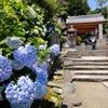 一万株の紫陽花 奈良・矢田寺(金剛山寺)