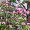 「佐久の季節便り」、「ジャガイモ」の植え付けは、4月20日までに…。