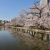 🌸桜の時期の上野公園🍃