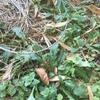 青草を刈り、青草をのせる ~無肥料栽培の道~