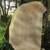 万葉歌碑を訪ねて(その946)―一宮市萩原町 萬葉公園(17)―万葉集 巻十 二一九一