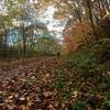 「雨の紅葉」と「北大銀杏並木」ライトアップ