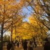 昭和記念公園の銀杏並木を観てきました!黄色に色づいて見頃です!