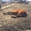 馬のためのアロマケア〜本当の自分を生きるVOL2〜