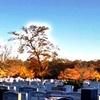 墓地の紅葉