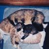 1995年 ちびお母さんとねんね 安心して凄い寝相だね。
