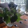 芙蓉の花。