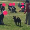 甲斐犬サン、鑑賞会を愉しむッの巻〜(´▽`人'▽')イエーイ