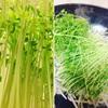 【自家栽培】豆苗の野菜炒め。だって安いんだもん。