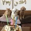 ☆ 4月13日は、ハルの3歳の誕生日 ☆*.・*♪