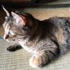 猫は最強にかわいい生き物。