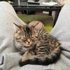 ただの報告になりますが、うちで猫を飼うことになりました。