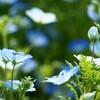 【山口旅行】ときわ公園のお花たち🌼