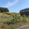 虹色ラボ畑2、3  ~新たな畑~