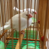 週末台湾旅行記4~文鳥占い、蘇杭點心店で小籠包