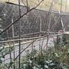 今日もバラの柵作り