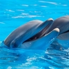 夏にお庭でプール!!子供たちは大喜びです。これで暑い夏を乗り切ろう!!