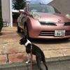 新穂高温泉 中尾高原 おさんぽ日和#1