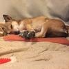 冬の暖房対策に犬用ホットカーペット ドギーマンのぽかぽか2WAYテキオンヒーター