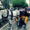 【Honeymoon】スペイン*マラガ①〜憧れの馬車は想像と違った編〜