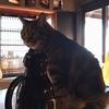 奈良町の猫カフェ、寧估庵。