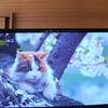"<span itemprop=""headline"">虐待された猫と岩合さん「津軽の猫」</span>"