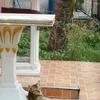 バンコクで猫が増えている